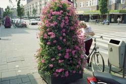 http://andrehoman.net/files/gimgs/th-11_10_p0440pinkflowers.jpg